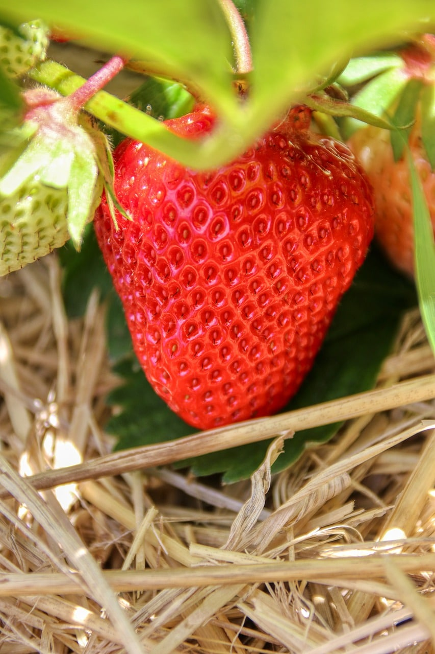 strawberry, fruit, firm